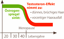 Diagramm Haarausfall Wechseljahre