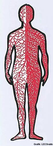 Lymphe im Körper